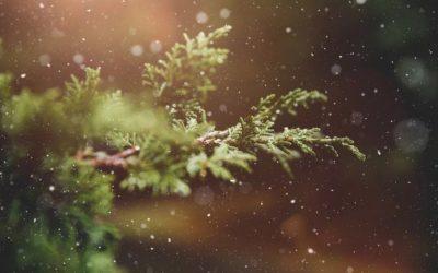 Nyhetsbrev 4 – 2019: En liten julhälsning från oss