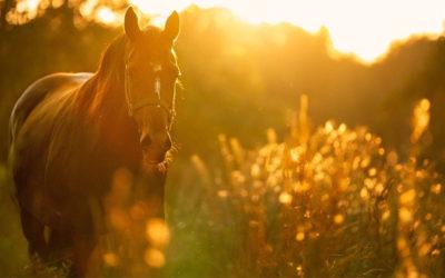 Miljösmart hästcentrum vid Axevalla travbana
