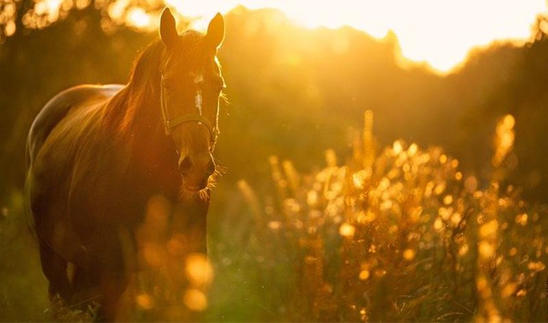 hästcentrum_vid_axevalla