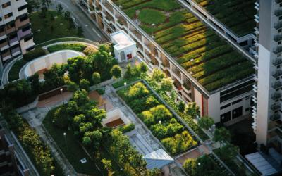 Framtidens tak är gröna